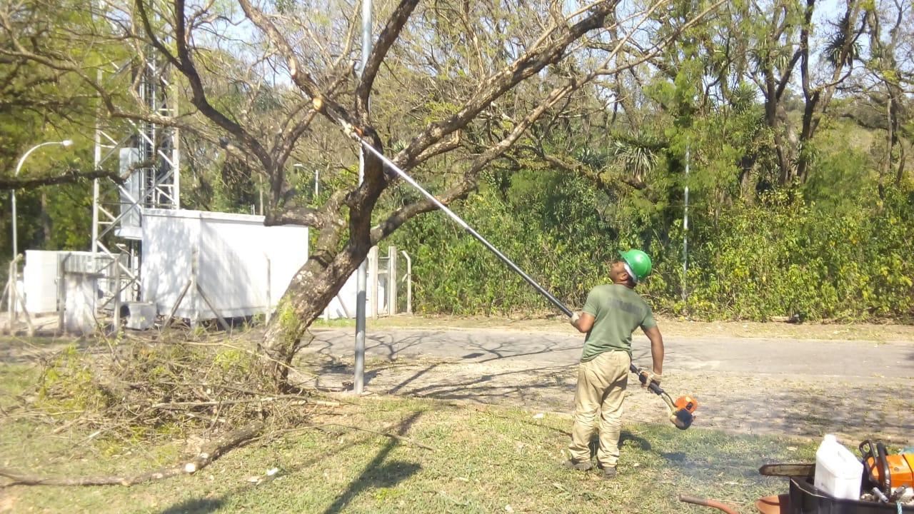 Poda de Árvores nas Áreas Comuns do Campus